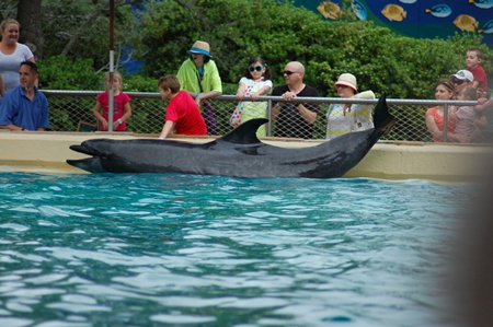 photo taken at sea World San Antonio 3/2012.
